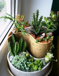 Уход за суккулентами и кактусами