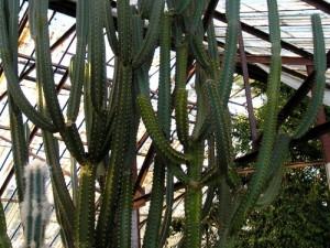 Влияние гормонов на биологические процессы кактусов