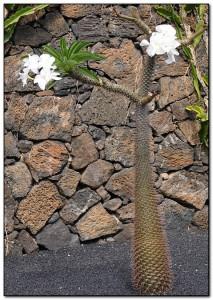 Выращивание кактусов на улице