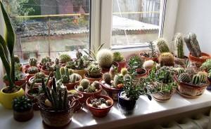 Во что сажать кактусы